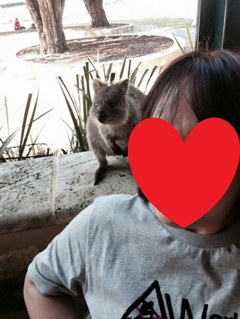 Rottnest Island, Australia: mum and quokka