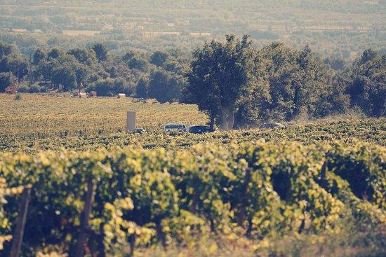 Champ De Vigne champ de vigne - picture of chateau val-joanis, pertuis - tripadvisor