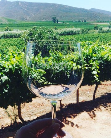 Robertson, Νότια Αφρική: Crystal glasses and green vineyards equals the best experience!