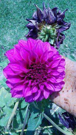 The Rock Garden Of Chandigarh Nice Flower