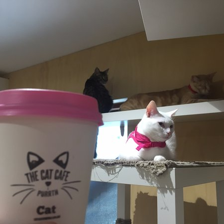 Subiaco, Australien: Good Coffee, Great Cat Company, Fun for cat lovers of all ages
