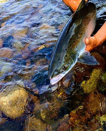 Margaree Forks, Canadá: Margaree wild Atlantic Salmon, summer. Photo by Jimmie Pedersen