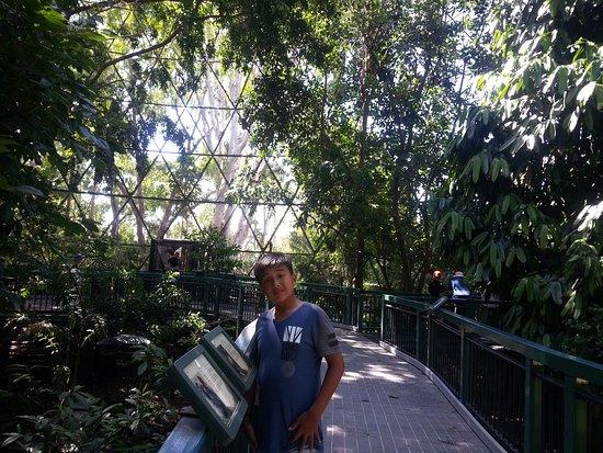 Βοτανικοί Κήποι και Ζωολογικός Κήπος Rockhampton: Rockhampton Botanic Gardens