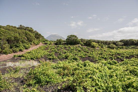 Madalena, Portugal: Pelo Pico das vinhas