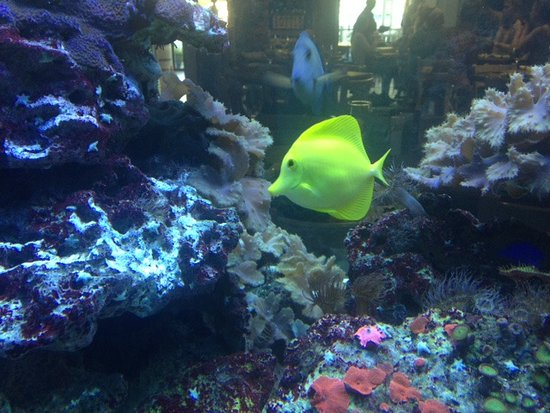 Jimmy the Fish: Pretty fish tank