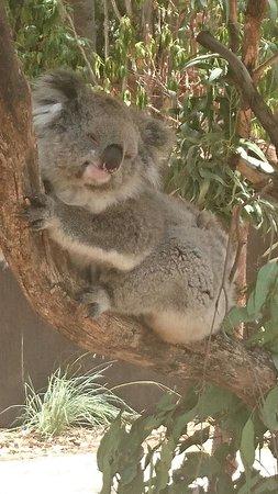 Mole Creek, Australia: IMG-20170118-WA0006_large.jpg