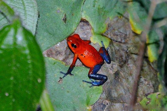 Sarapiqui, Costa Rica: photo2.jpg