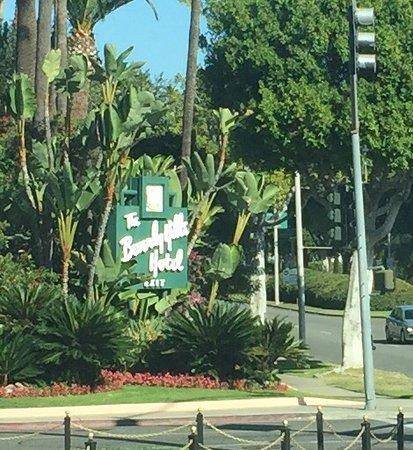 Hollywood: photo1.jpg