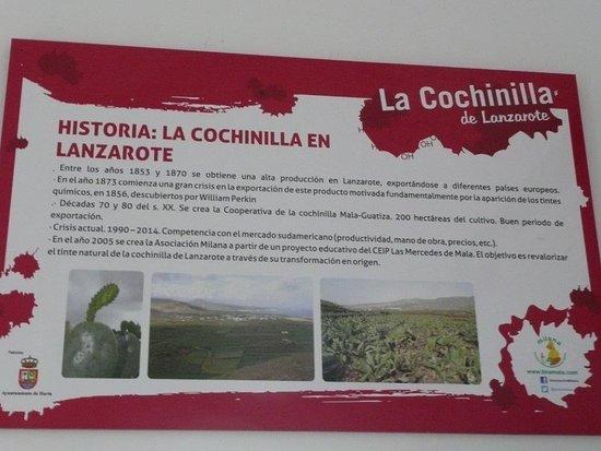Mala, Spanien: Kaktuslaus auf Lanzarote