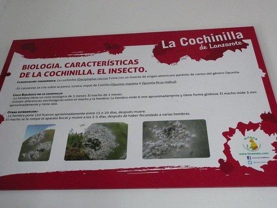 Mala, Spanien: Züchtung