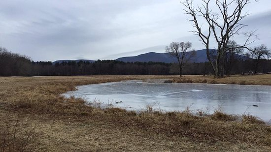 Arkville, Estado de Nueva York: Icy pond at the Thorn Preserve