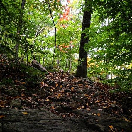 Mahwah, نيو جيرسي: Woodlands