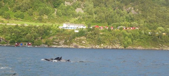 Stord Municipality, Norway: Wales in Langenuen Fjord