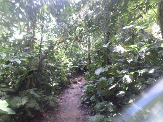 Boicucanga: Trilha para as cachoeiras.