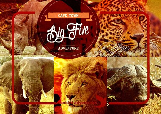 Worcester, África do Sul: Become apart of the animal kingdom and meet the big 5 like never before. Or roam free like the m