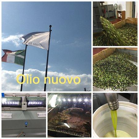 Ficulle, Italy: non solo vino in degustazione .... olio EVO Bio