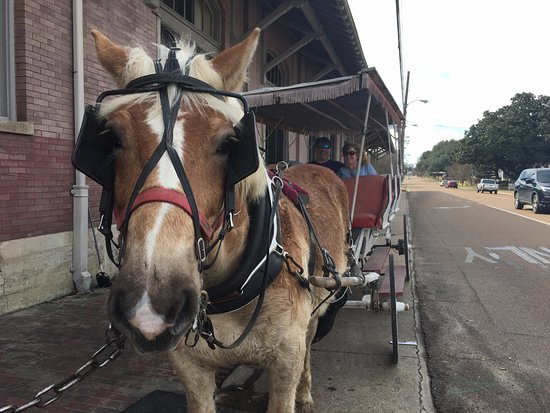 Natchez, MS : Will the horse, likes carrots and going to the barn