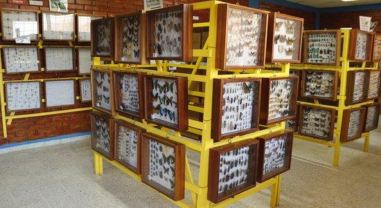 La Ceiba, Honduras: Insectos de 140 países del mundo en exihibicion.