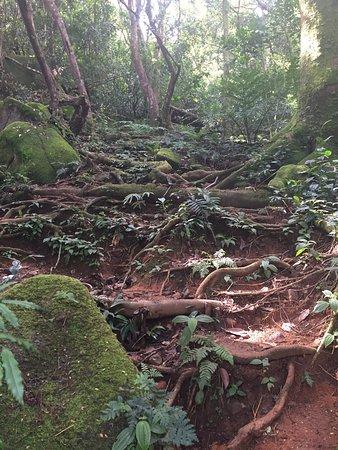 Victoria, Seychellerne: photo1.jpg