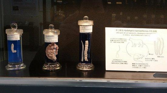 Meguro, Japón: cat tapeworm