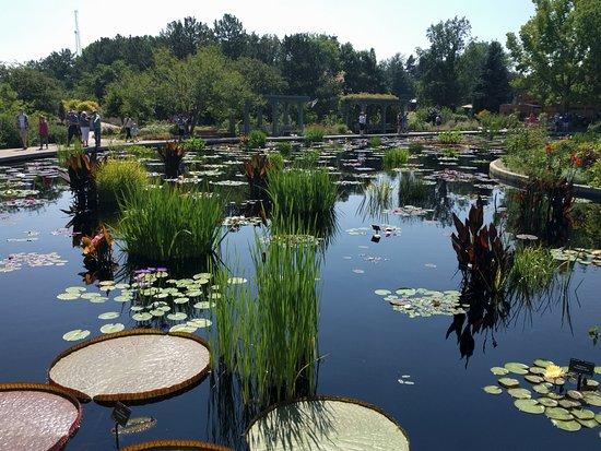 Lily pad pond - Picture of Denver Botanic Gardens, Denver - TripAdvisor