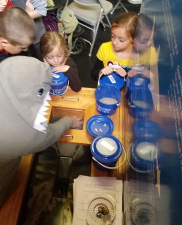 Bloomfield Hills, MI: Sifting through sand to find hidden treasures like fossils and shark teeth!