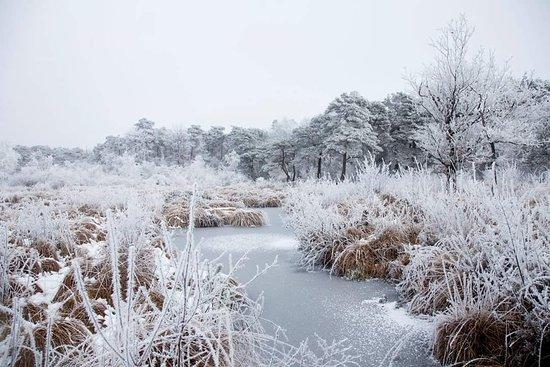 Balkbrug, เนเธอร์แลนด์: Het Reestdal in de winter.