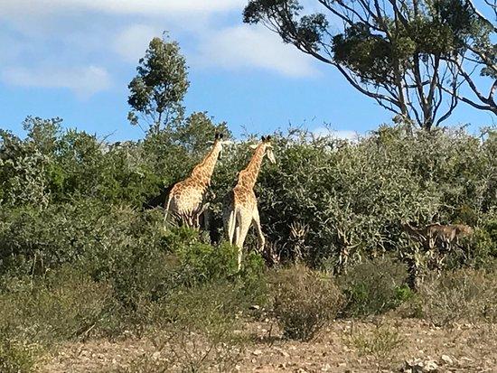 Albertina, Republika Południowej Afryki: photo1.jpg