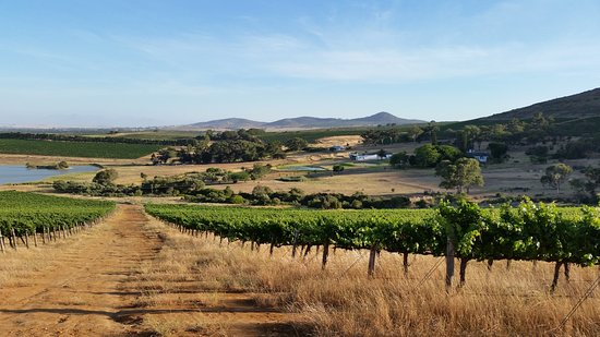 Darling, Sudáfrica: View from vineyards towards the guest cottages - Burgherspost.