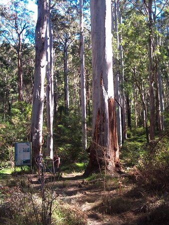 Blackheath, Australia: Blue Gum Forest at the bottom