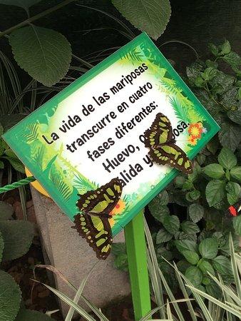 Butterfly Kingdom: photo0.jpg