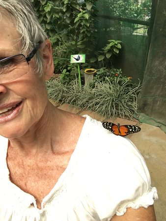 Butterfly Kingdom: photo4.jpg