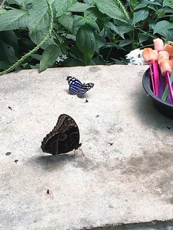 Butterfly Kingdom: photo5.jpg