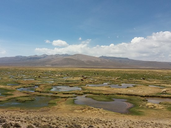 Salinas y Aguada Blanca National Reserve: 20161227_132735_large.jpg