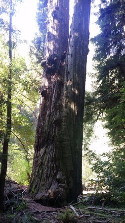 Mill Valley, CA: Muir Woods