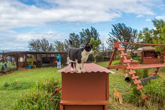 Lanai City, هاواي: 25,000 squared feet of open air for all our cats to romp and roam!