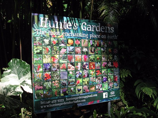 Hunte's Gardens: A photo description of the flowers you are enjoying