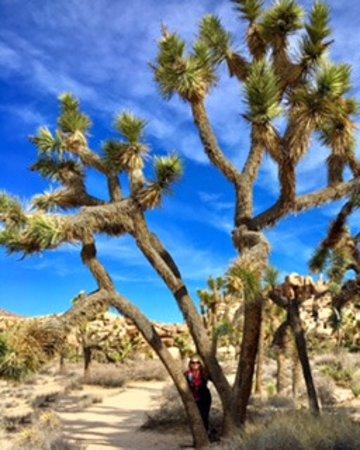 Twentynine Palms, Kalifornien: Barker Dam Trail, Joshua Tree