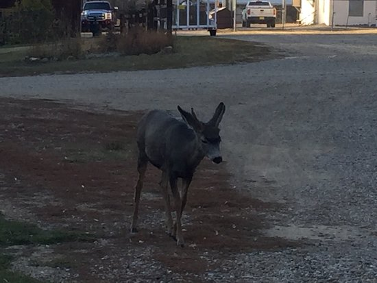 Rio Colorado Lodge: The deer walk right up to you and are seen around the lake.