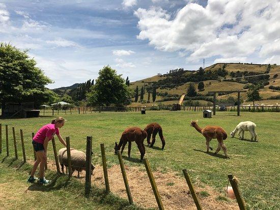 Matatoki, New Zealand: ...and sheep, oh my!