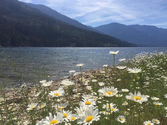 Crawford Bay, Kanada: Flowers on the lake