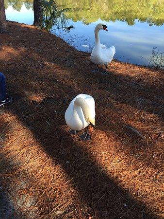 Richmond Hill, GA: photo3.jpg