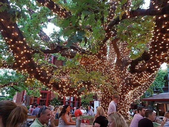 The Oaks Hotel Bar & Grill: FB_IMG_1484738061506_large.jpg