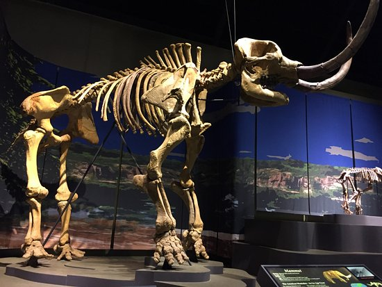 Cartersville, Geórgia: Fossils!