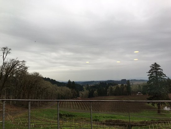 Newberg, OR: View from Private Tasting Room at Alexana
