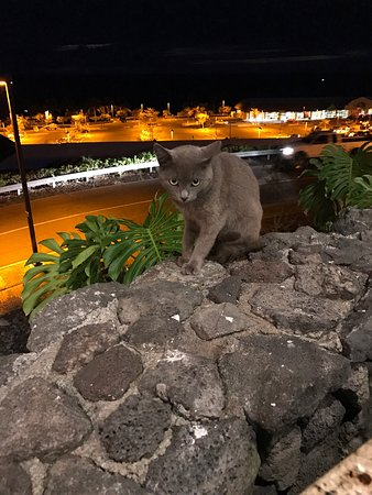 Keauhou, Hawái: Friendly cat that popped by our table while eating.
