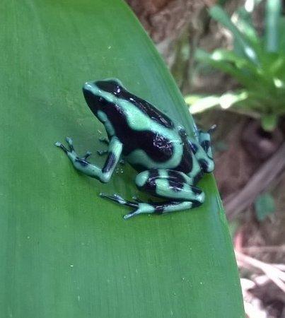 Frogs Heaven: Commando kikker