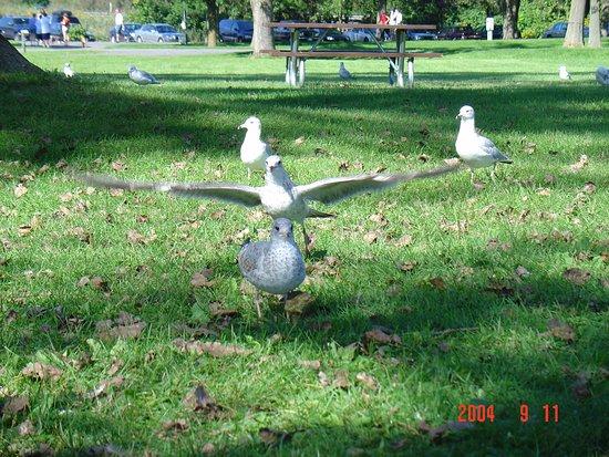 Liverpool, Estado de Nueva York: picnic area l in the park