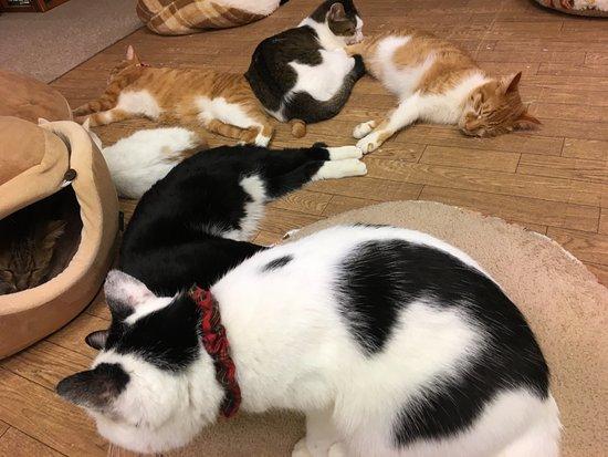 Hogo Cat Cafe Nekokatsu