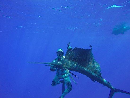 Haapiti, Polinésia Francesa: spearfishing a sailfish in the blue water of Moorea